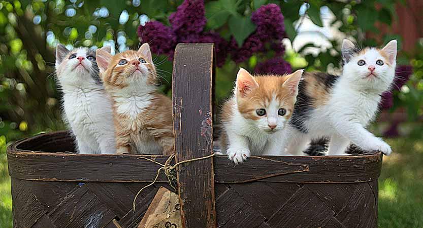 כל מה שרציתם לדעת על הטיפול בחתלתול החדש