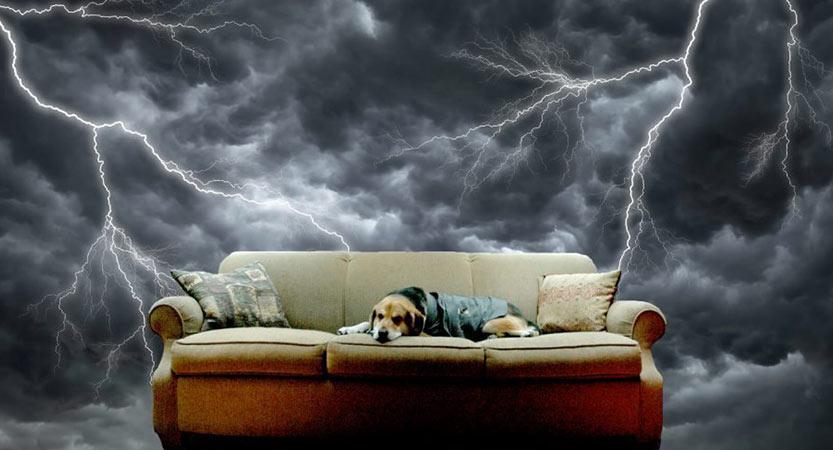 כלבים וחרדה מרעמים