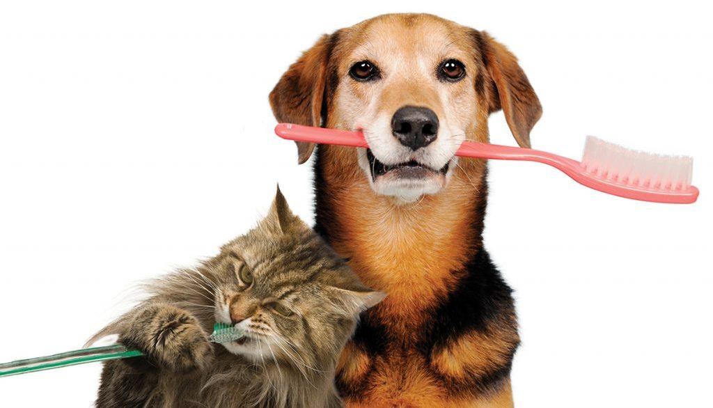 בריאות הפה לבעלי חיים
